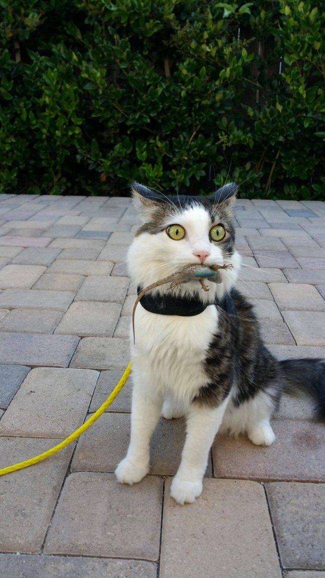 reações-de-gatos-23