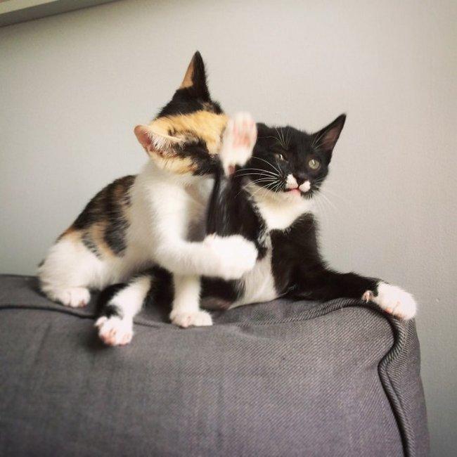 reações-de-gatos-4
