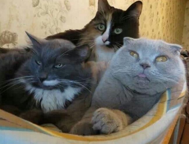 reações-de-gatos-6