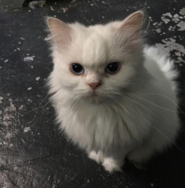 reações-de-gatos-8