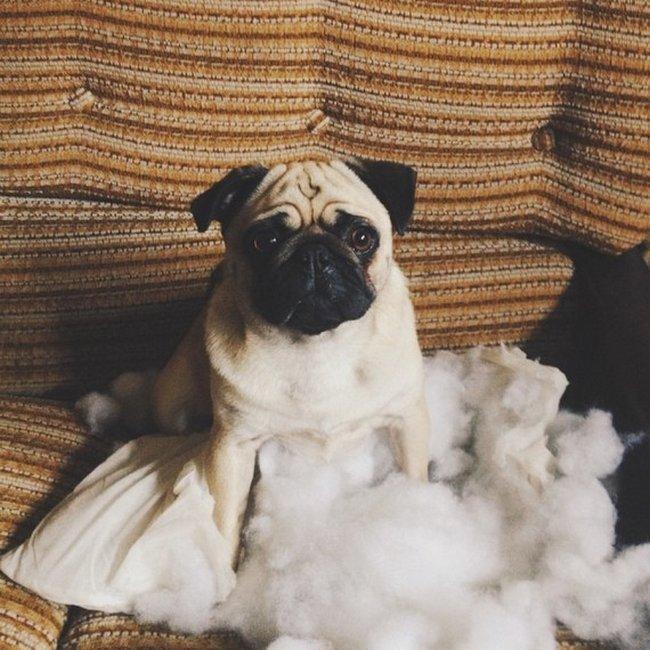 cachorros-aprontando-11