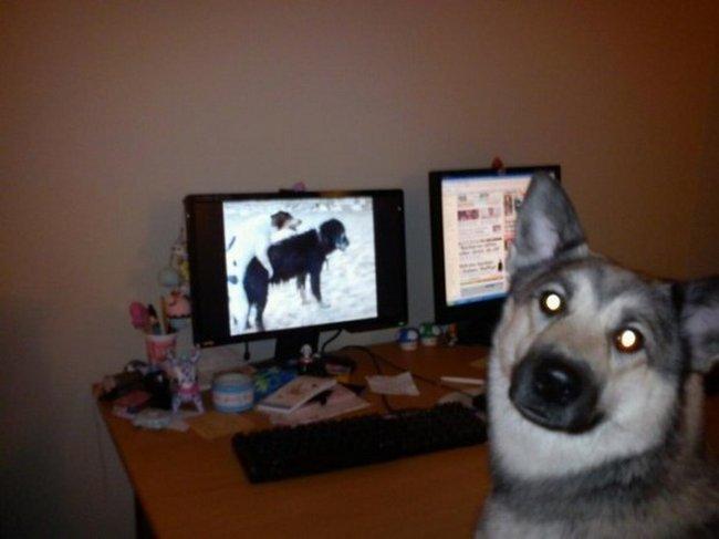 cachorros-aprontando-14