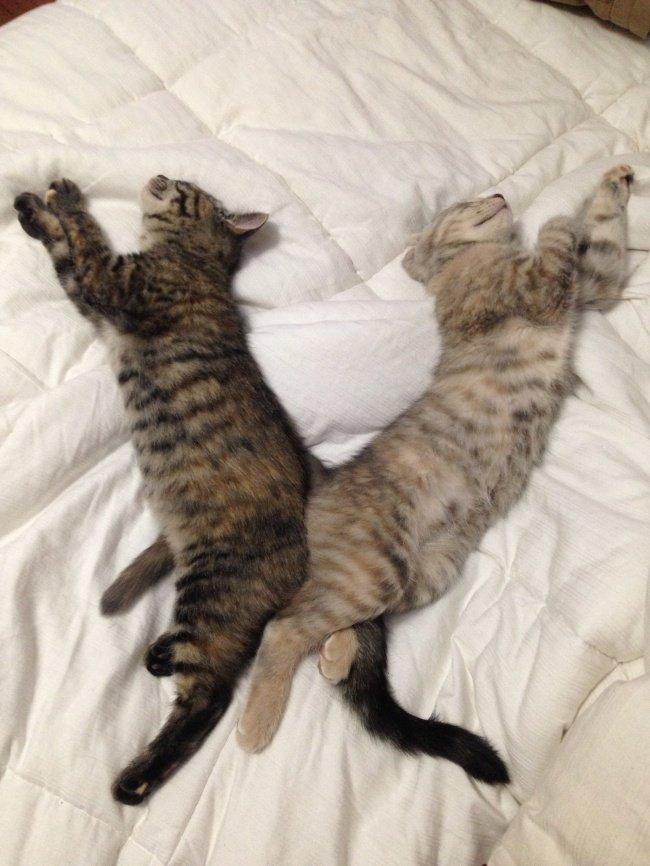 gatos-dormindo-13