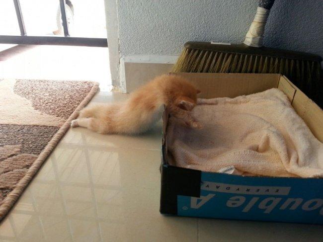 gatos-dormindo-15