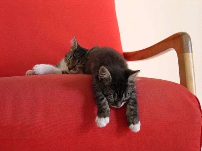 gatos-dormindo-16