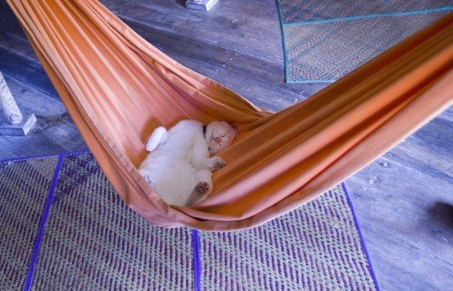 gatos-dormindo-2