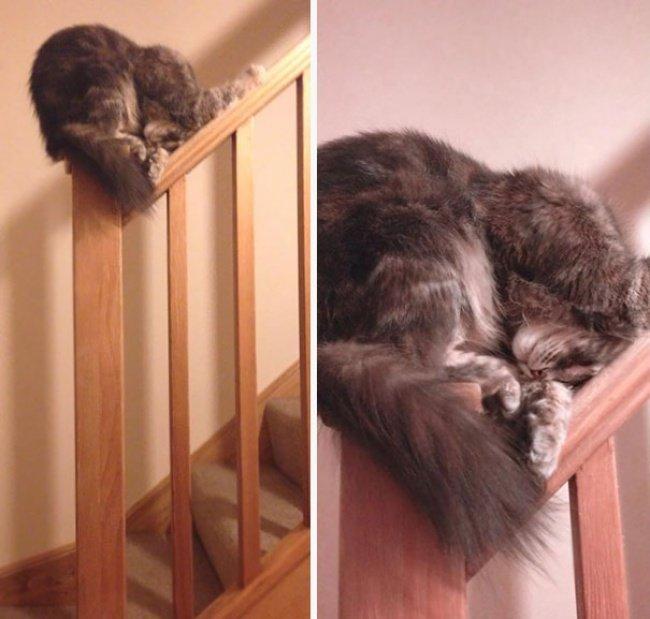 gatos-dormindo-21