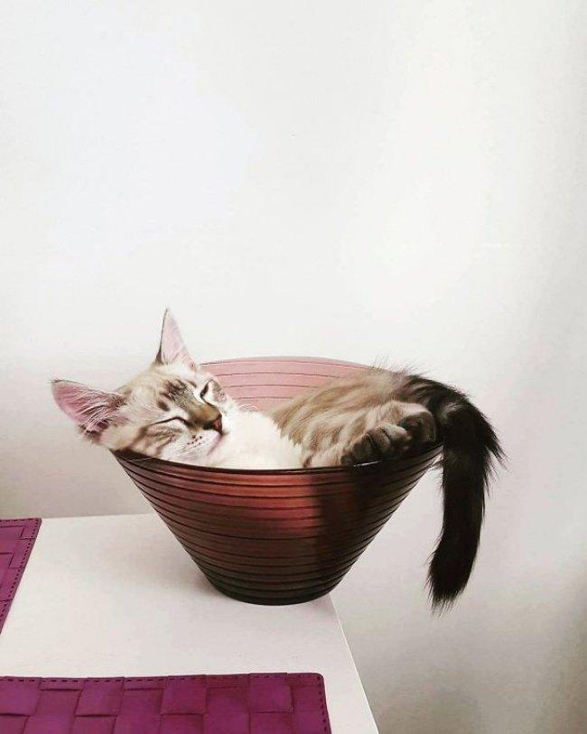 gatos-dormindo-22