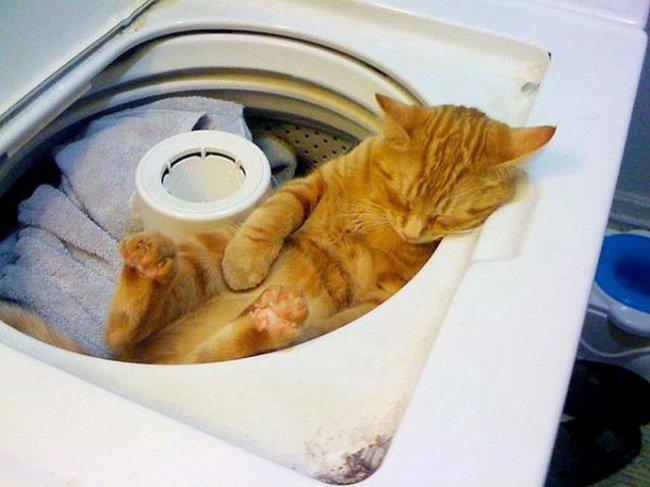 gatos-dormindo-23