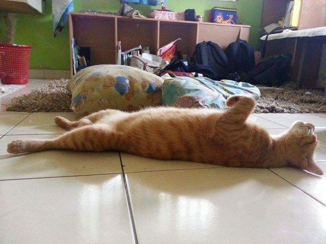 gatos-dormindo-4