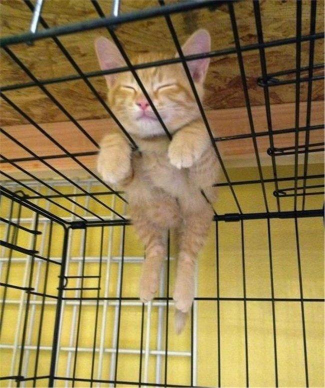 gatos-dormindo-7