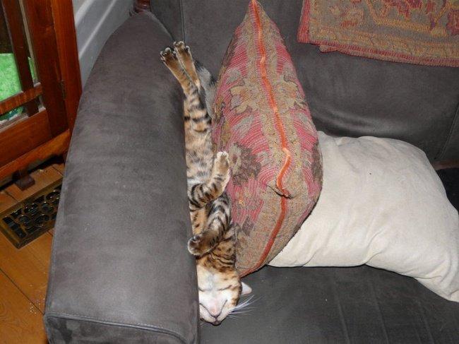 gatos-dormindo-8