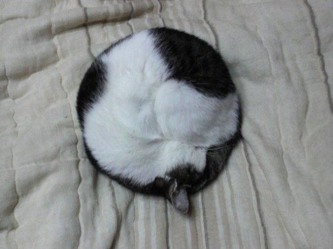 gatos-dormindo-9