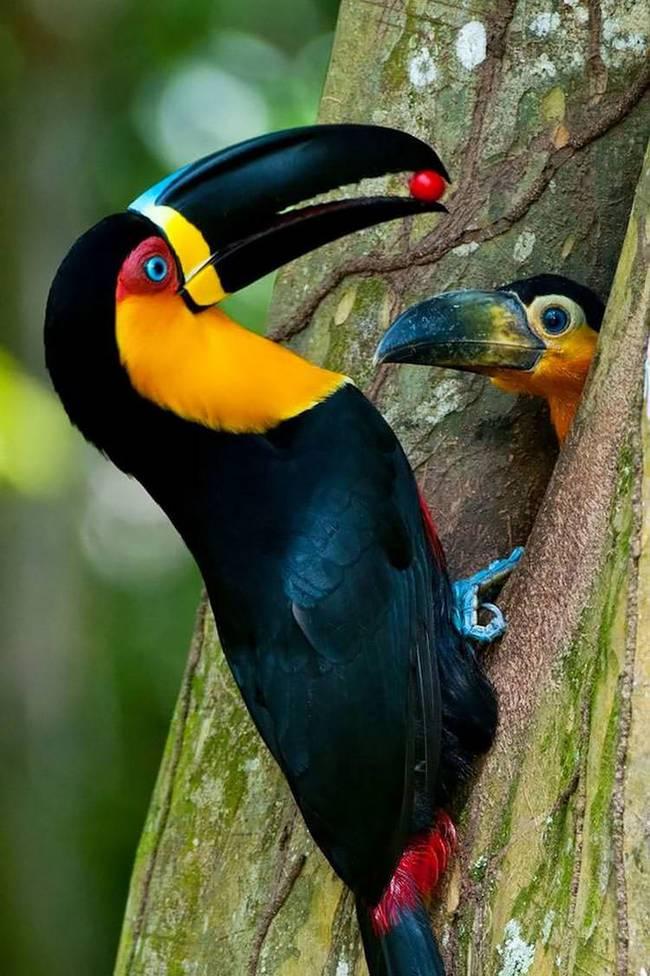 filhote-passarinho-11