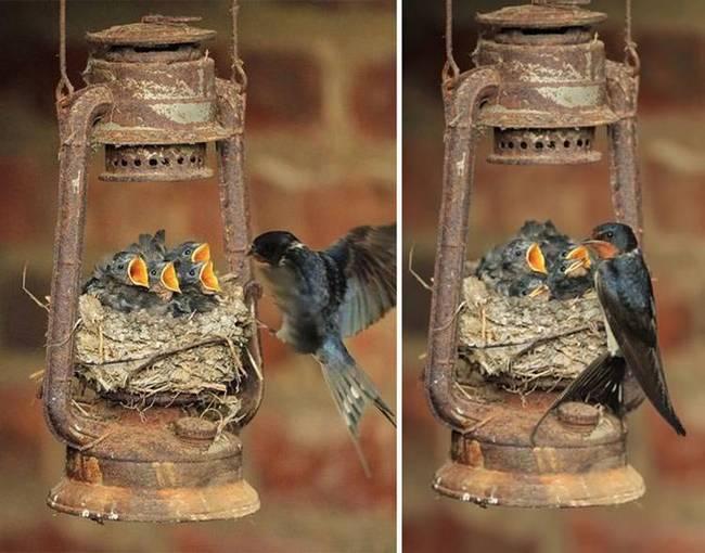 filhote-passarinho-12