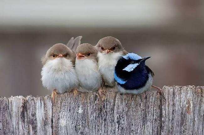filhote-passarinho-13