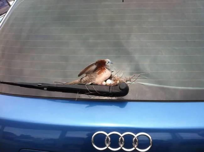 filhote-passarinho-14