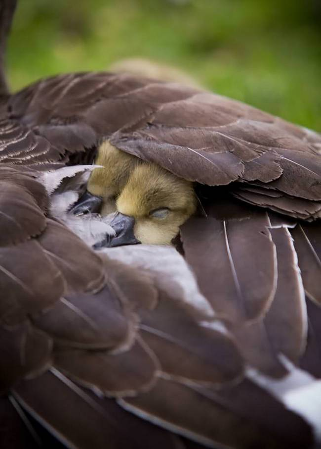 filhote-passarinho-15