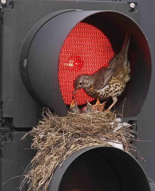 filhote-passarinho-16