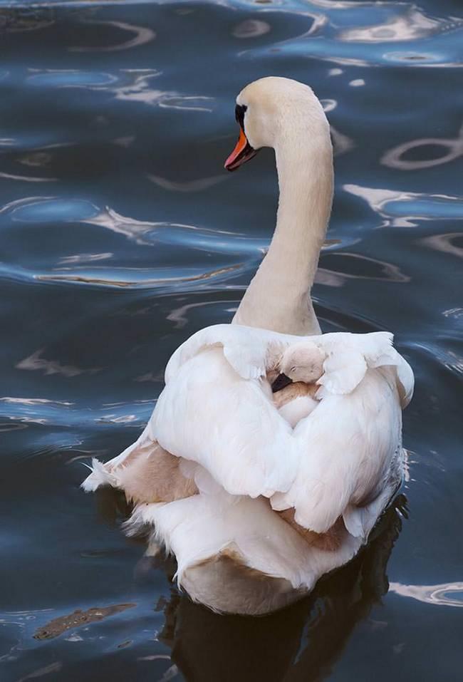 filhote-passarinho-17