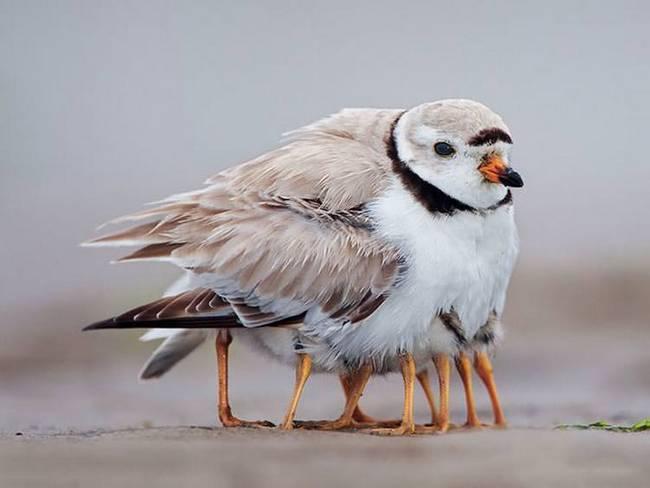 filhote-passarinho-2