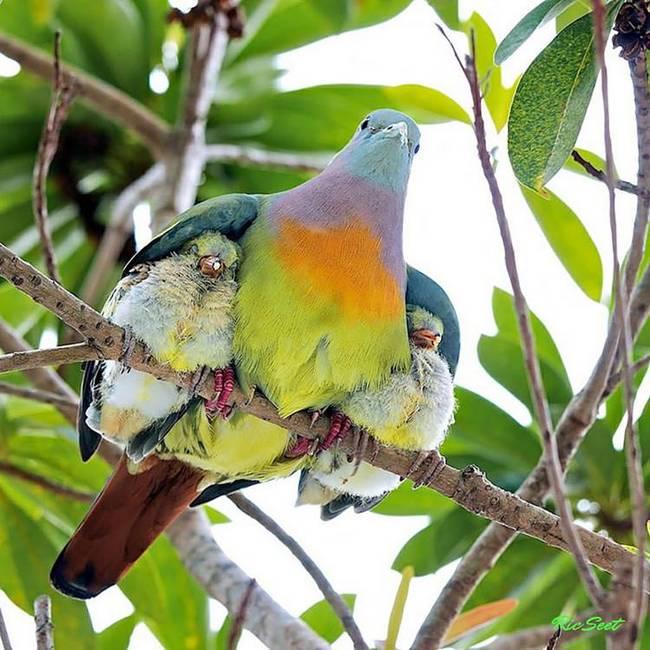 filhote-passarinho-4