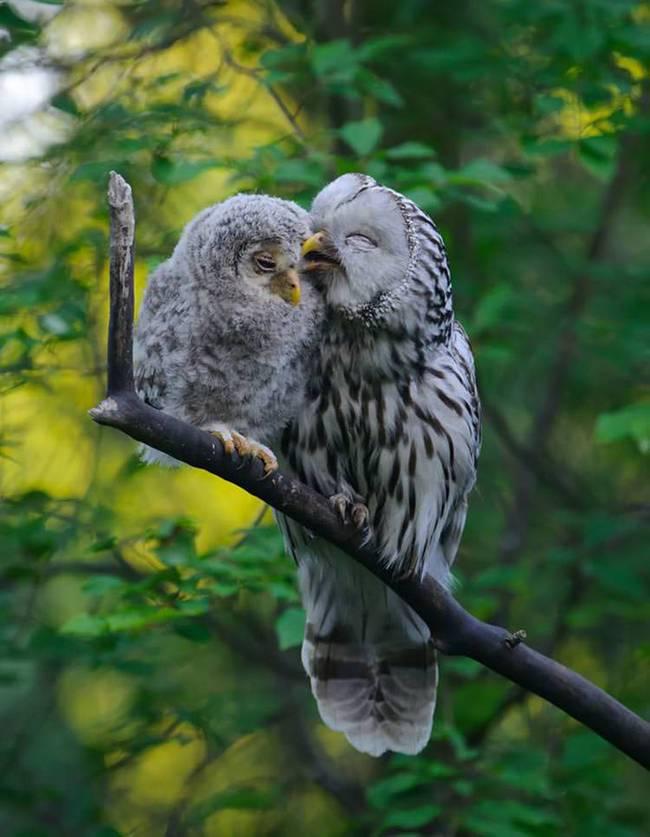 filhote-passarinho-6