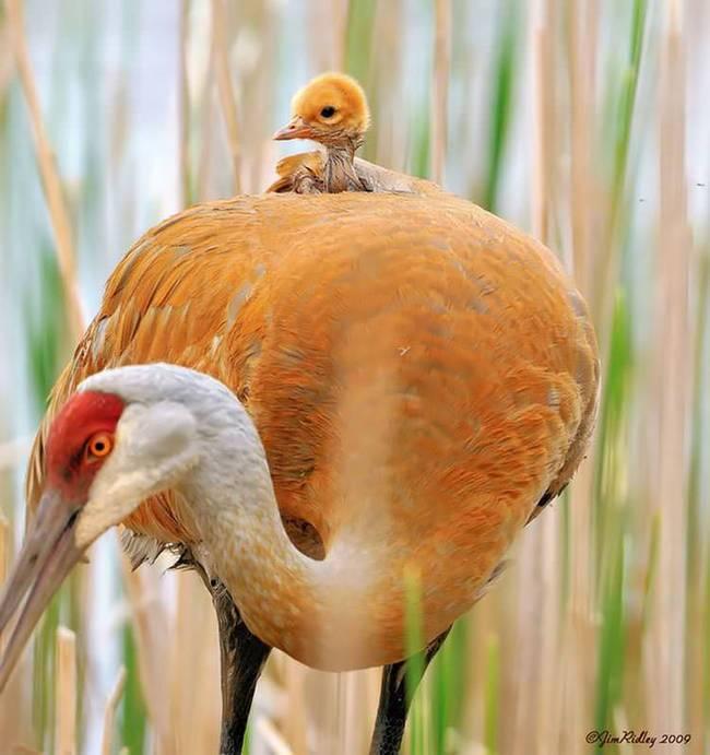 filhote-passarinho-8