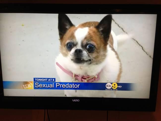 vida-cachorro-11