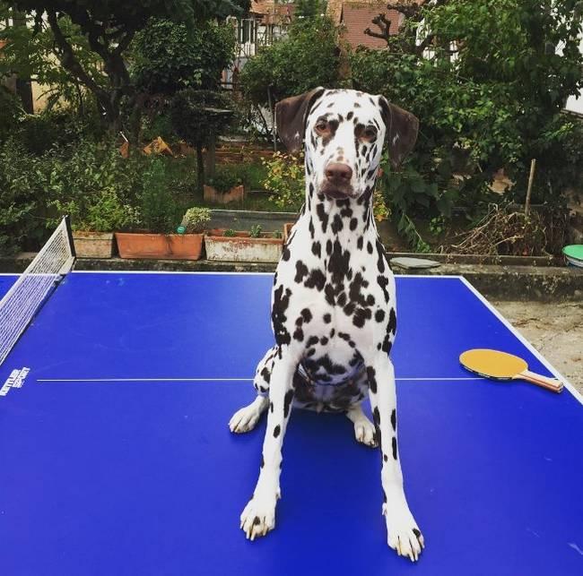 vida-cachorro-2