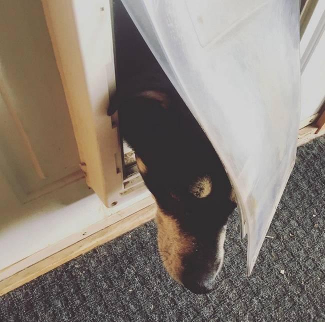 vida-cachorro-4