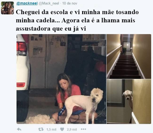 vida-cachorro-5