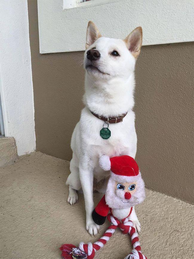 cachorro-papai-noel-3