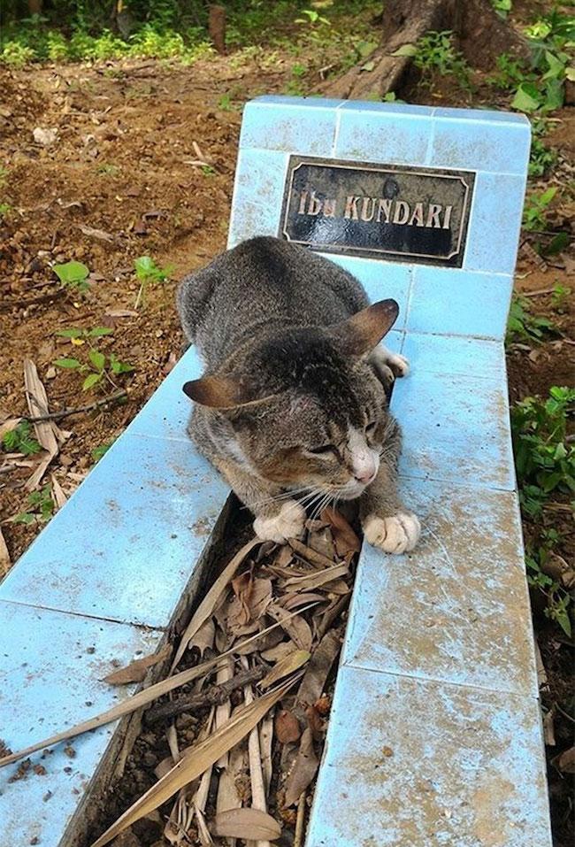gato-cemiterio1