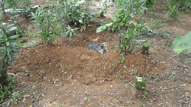 gato-cemiterio2