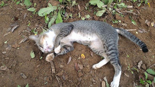 gato-cemiterio3