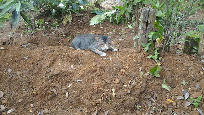 gato-cemiterio4