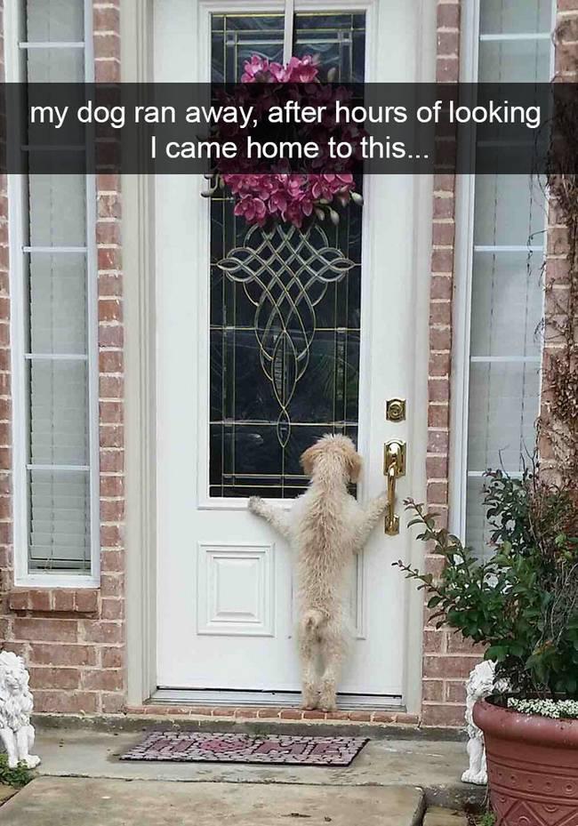 snap-cachorro-13