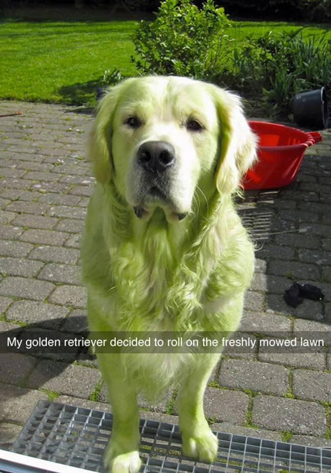 snap-cachorro-17