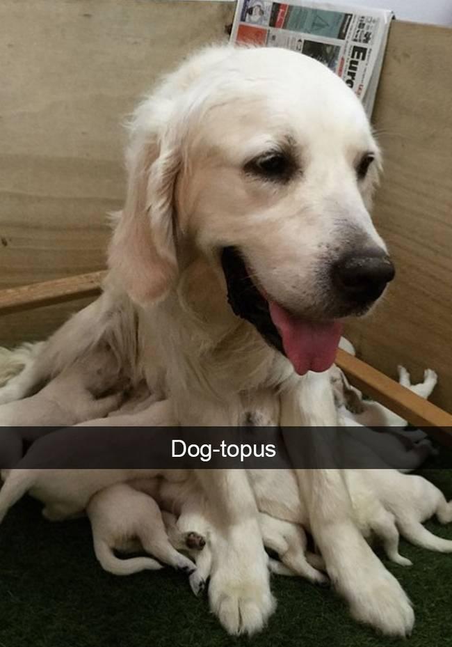 snap-cachorro-2