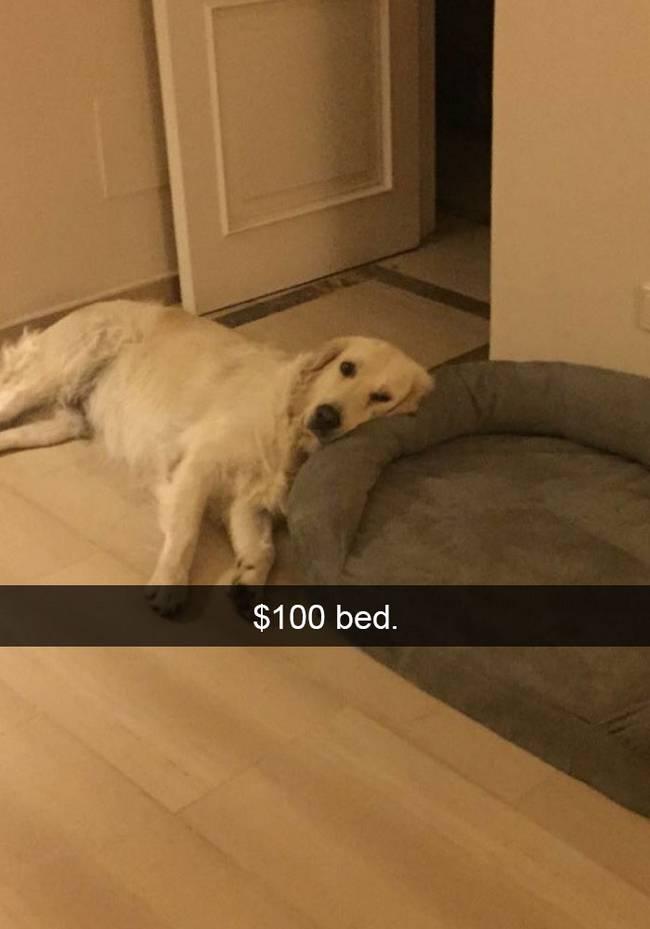 snap-cachorro-22