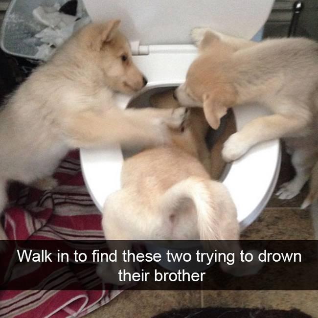 snap-cachorro-25