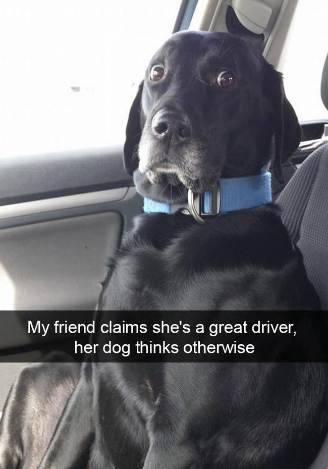 snap-cachorro-28