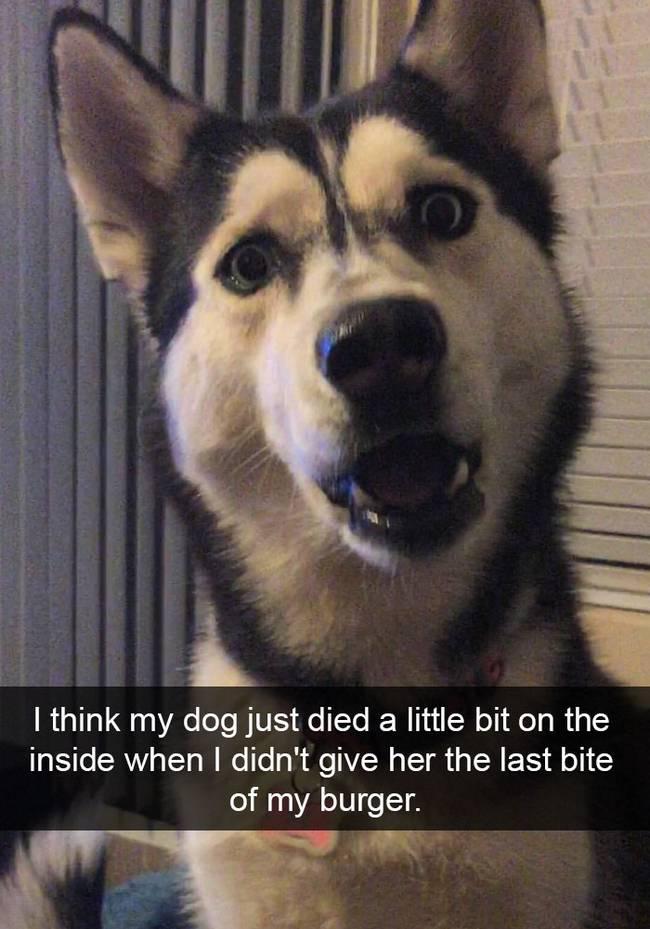 snap-cachorro-5