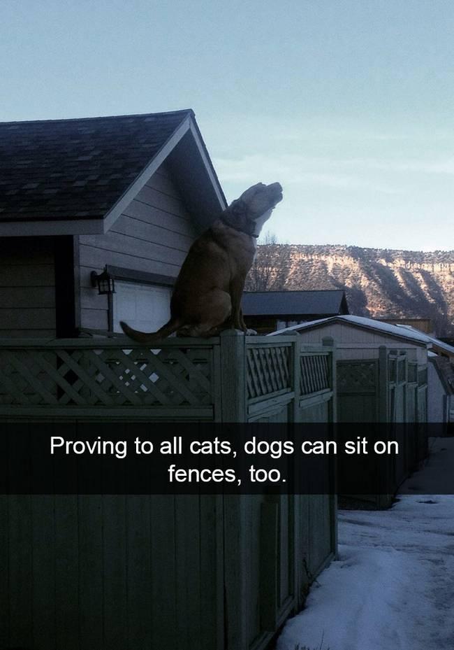snap-cachorro-6