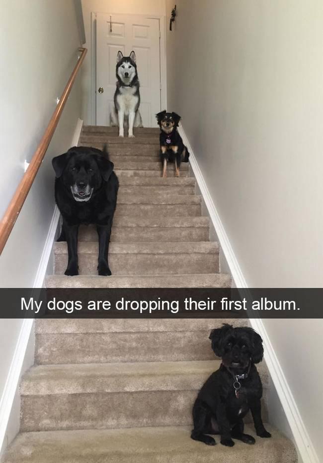 snap-cachorro-9