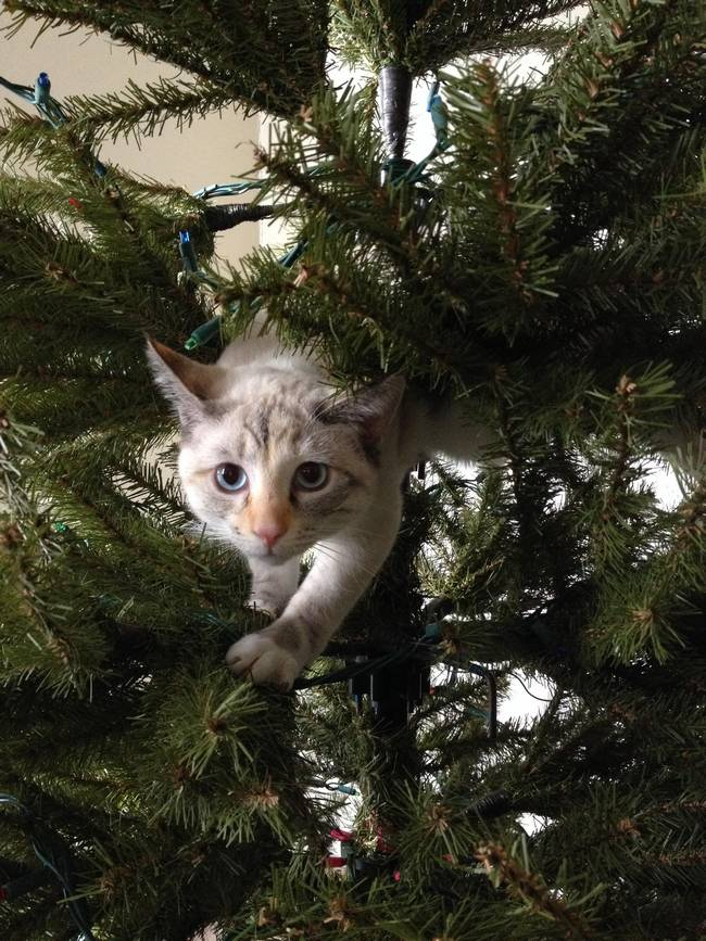 gatos-natal-1