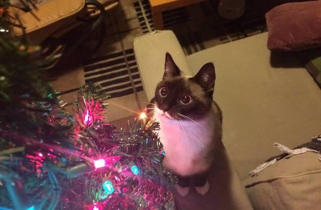 gatos-natal-10