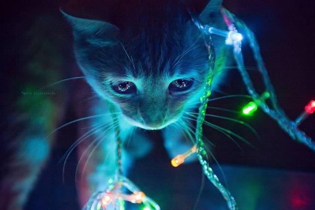 gatos-natal-11