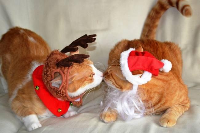 gatos-natal-12